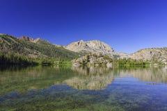 Il bello lago gull fotografia stock