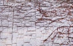 Il bello muro di mattoni Fotografia Stock Libera da Diritti