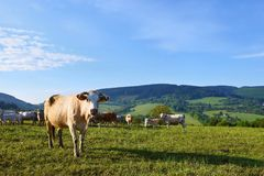 Il bello paesaggio con il pascolo partorisce nelle montagne di estate La repubblica Ceca - i Carpathians - l'Europa bianchi Fotografie Stock