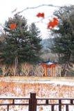 Il bello paesaggio dell'isola dell'isola del sud della torre della neve di Seoul fotografie stock libere da diritti
