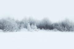 Il bello paesaggio della foresta dell'inverno, alberi ha coperto la neve immagini stock