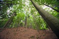 Il bello paesaggio della foresta in estate. Immagini Stock
