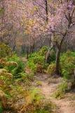 Il bello paesaggio della via nella foresta del fiore di ciliegia fotografia stock libera da diritti