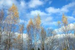 Il bello paesaggio di autunno con giallo va sulle betulle sopra cielo blu con le nuvole bianche il giorno soleggiato Immagini Stock Libere da Diritti