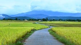 Il bello paesaggio di riso il bello paesaggio delle risaie Immagini Stock