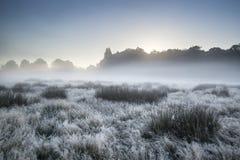 Il bello paesaggio nebbioso dell'alba di Autumn Fall sopra gelo ha riguardato il fi Immagini Stock Libere da Diritti
