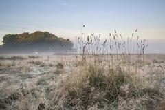 Il bello paesaggio nebbioso dell'alba di Autumn Fall sopra gelo ha riguardato il fi immagine stock
