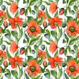 Il bello papavero rosso fiorisce con le foglie verdi su fondo bianco Modello floreale di estate senza cuciture Pittura dell'acque Fotografie Stock