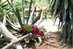 Il bello pappagallo colorato si siede su un ramo, l'uccello, animale fotografia stock libera da diritti