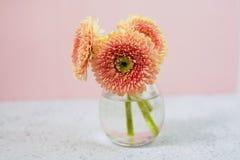 Il bello rosa della molla fiorisce sulla vista pastello blu del piano d'appoggio Bordo floreale dentellare stile piano di disposi immagini stock libere da diritti