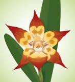 Il bello rosso dell'orchidea, ingiallisce colorato e con le toppe, illustrazione di vettore Immagine Stock