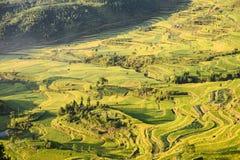 Il bello terrazzo del riso sistema in Mingao, Zhejiang, Cina fotografia stock