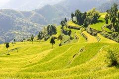 Il bello terrazzo del riso sistema in Mingao, Zhejiang, Cina immagine stock