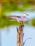 Il bello uccello acquatico fotografie stock