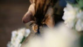 Il Bengala Cat Walking On Tree archivi video