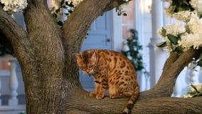 Il Bengala divertente Cat Resting On Tree archivi video