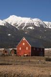 Il bestiame avvolge il cavallo della rottura che pende il ranch rosso della montagna del granaio Immagine Stock