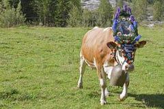 Il bestiame ha prodotto 2011 Fotografie Stock Libere da Diritti