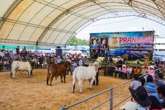 Il bestiame mostra 2012 Immagini Stock Libere da Diritti