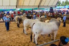 Il bestiame mostra 2012 Fotografia Stock Libera da Diritti