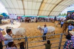 Il bestiame mostra 2012 Immagini Stock