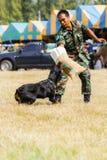 Il bestiame mostra 2013 Fotografia Stock Libera da Diritti