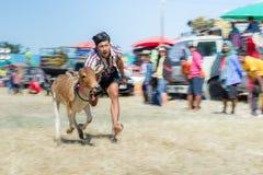 Il bestiame mostra 2015 Fotografie Stock