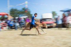 Il bestiame mostra 2015 Fotografie Stock Libere da Diritti