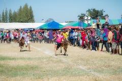 Il bestiame mostra 2015 Immagini Stock Libere da Diritti