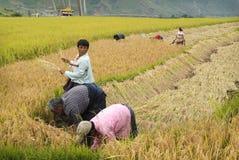 Il Bhutan, agricoltura Fotografia Stock