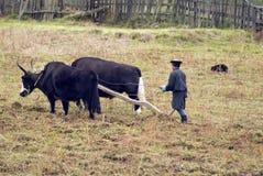 Il Bhutan, agricoltura Immagine Stock Libera da Diritti