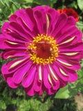 Il bianco del fiore di Thee gradisce i sogni di un sammer immagini stock
