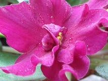 Il bianco del fiore di Thee gradisce i sogni di un sammer fotografia stock