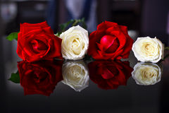 Il bianco ed il colore rosso sono aumentato Fotografia Stock