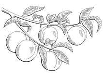 Il bianco grafico del nero del ramo della frutta della pesca ha isolato l'illustrazione di schizzo Fotografia Stock