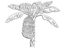 Il bianco grafico del nero del ramo della palma della banana ha isolato l'illustrazione di schizzo Fotografia Stock Libera da Diritti