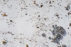 Il bianco ha dipinto la parete con licheni come fondo Fotografie Stock