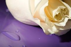 Il bianco a macroistruzione è aumentato sul lillà Fotografia Stock
