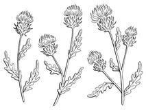 Il bianco nero grafico del fiore del cardo selvatico ha isolato il vettore dell'illustrazione di schizzo Fotografia Stock Libera da Diritti