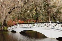 Sc bianco ornamentale della piantagione della magnolia del ponte Fotografia Stock Libera da Diritti