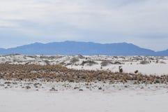 Il bianco smeriglia il monumento nazionale, New Mexico Immagini Stock Libere da Diritti