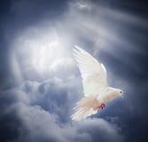 Il bianco volante si è tuffato sul fondo del cielo blu Fotografia Stock Libera da Diritti