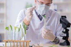 Il biochimico maschio che lavora nel laboratorio sulle piante Immagini Stock
