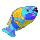 Il bleekeri di Chlorurus è pappagallo del pesce Illustrazione di vettore Immagine Stock