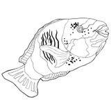 Il bleekeri di Chlorurus di coloritura è pappagallo del pesce Illustrazione di vettore Immagini Stock