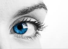 œil bleu Images libres de droits