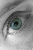 œil bleu, instruction-macro Image stock