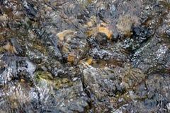 Il bloccaggio ad alta velocità del ` di CreekStock del ` del fondo roccioso dell'insenatura con acqua a flusso rapido unretouched Fotografie Stock Libere da Diritti