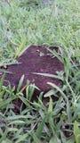 Il blocchetto dell'argilla rossa hiden in erbe immagine stock