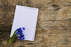 Il blocco note in bianco con lo scilla blu fiorisce su fondo di legno Immagini Stock